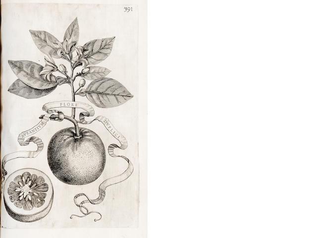 FERRARI, GIOVANNI BAPTISTA. 1584-1685.