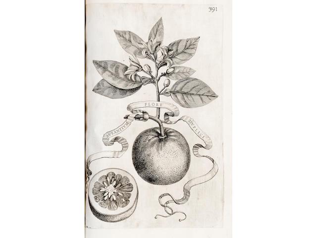 FERRARI, GIOVANNI BAPTISTA. 1584-1685. Hesperides sive de malorum avreorum cultura et usu libri quatuor Rome: Hermann Scheus, 1646.