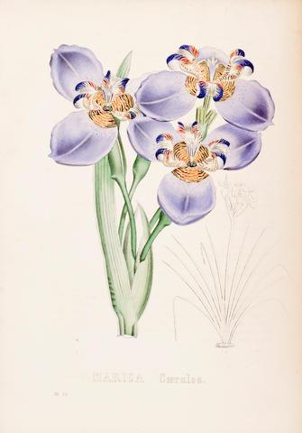 FLOWERS. Flore de l'amateur. Choix des plantes les plus remarquables pour leur élégance et leur utilité. Paris: Leroi, 1847.
