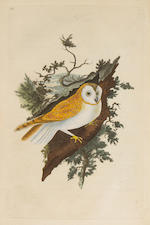 DONOVAN, EDWARD. 1768-1837. The Natural History of British Birds; or a Selection of the Most Rare, Beautiful, and Interesting Birds Which Inhabit This Country. London: for the author and for F. and C. Rivington, 1794-1819.