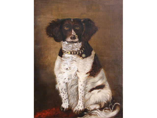 American School (19th Century) Spaniel, 1885 22 x 16in