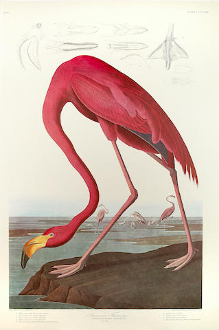 John James Audubon (American, 1785-1851) The Birds of America. New York & Amsterdam: Johnson Reprint Corporation & Theatrum orbis terrarum, 1971-72.