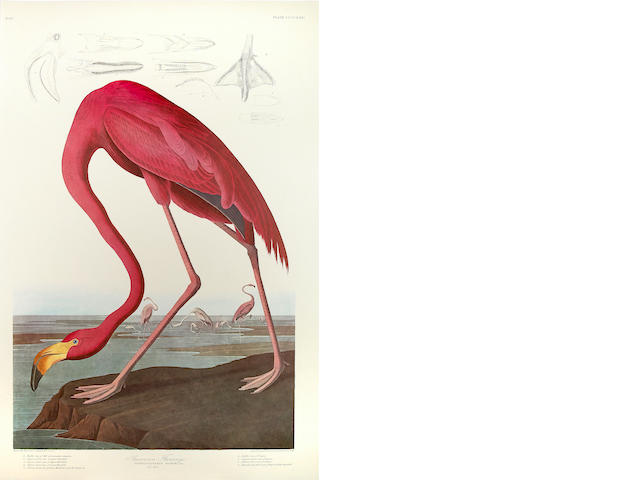 AUDUBON, JOHN JAMES. 1785-1851. The Birds of America. New York & Amsterdam: Johnson Reprint Corporation & Theatrum orbis terrarum, 1971-72.