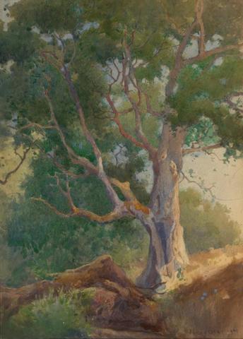 (n/a) Percy Gray (1869-1952) Old oak tree, 1909 13 x 9 1/4in