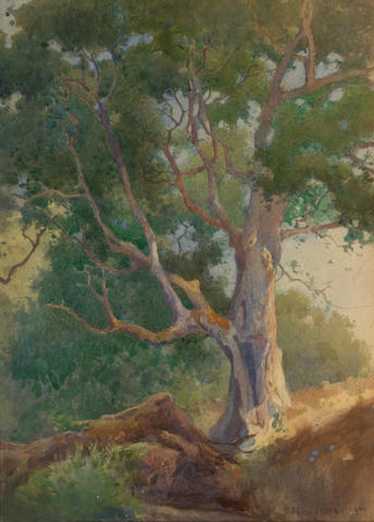 Percy Gray, An Old Oak Tree