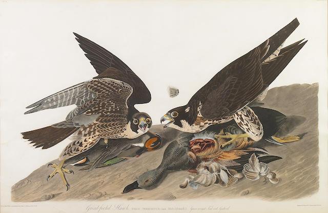 John James Audubon (American, 1785-1851); Great Footed Hawk engraving w/aquatint;