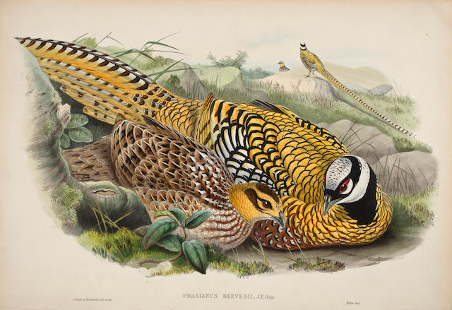 GOULD, JOHN. 1804-1881. 17 hand-colored lithographed plates from the Birds of Asia, London, 1850-83,