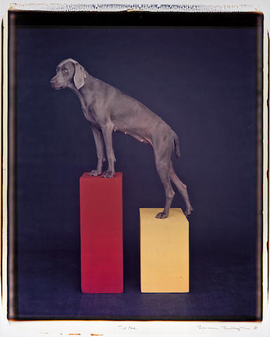 William Wegman (American, born 1943); Tip Toe;
