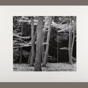 Brett Weston (American, 1911-1993); Beech Forest, Holland, Pl. 7 from Europe Portfolio;