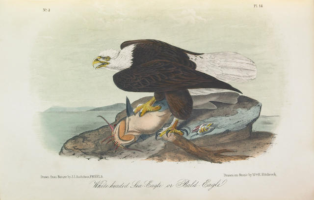AUDUBON, JOHN JAMES. 1785-1851. The Birds of America. New York: George R. Lockwood, [1870-71].