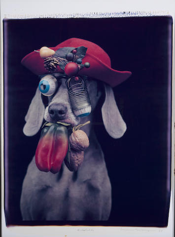 William Wegman (American, born 1943); Arcimbaldo;
