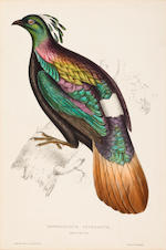 A group of three ornithological prints, John Gould