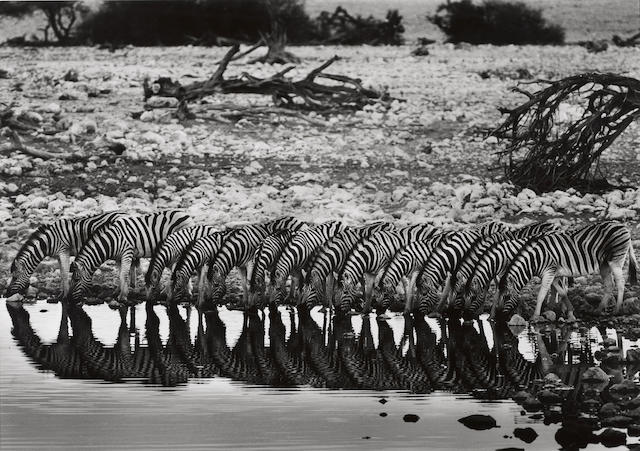 Sebastião Salgado (Brazilian, born 1944); Mountain Zebra, Hoanib River Valley, Damaraland, Namibia;