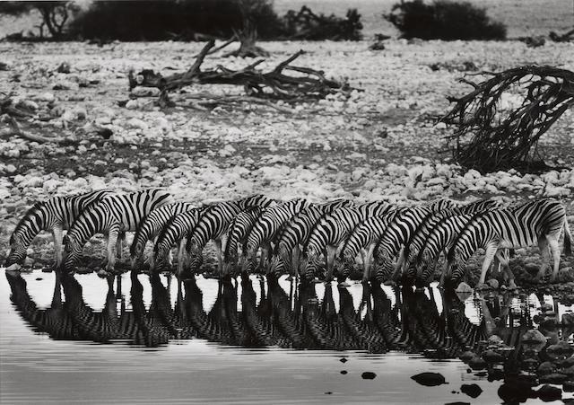 Sebastião Salgado (Brazilian, born 1944); Mountain Zebras, Nambia;