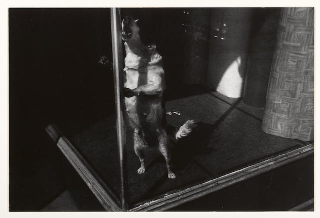 Lee Friedlander (American, born 1934); Jersey City, New Jersey;
