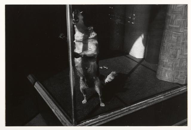 Lee Friedlander (American, born 1934); Jersey City, New Jersey;