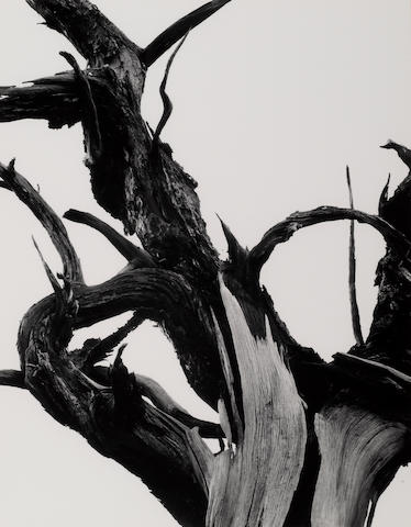 Ansel Adams (American, 1902-1984); Dead Tree, Sunset Crater National Monument, Arizona, Pl. 11,  from Portfolio II;