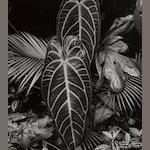 Brett Weston (American, 1911-1993); Hawaii, Leaves and Lava;