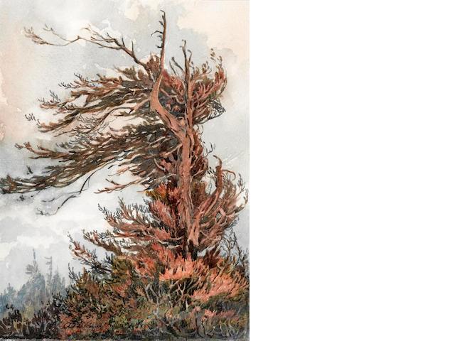 Albert Thomas DeRome (American, 1885-1959) Weeping redwood, Brainard's Point, south of Arcata, 1918 10 1/2 x 7 3/4in