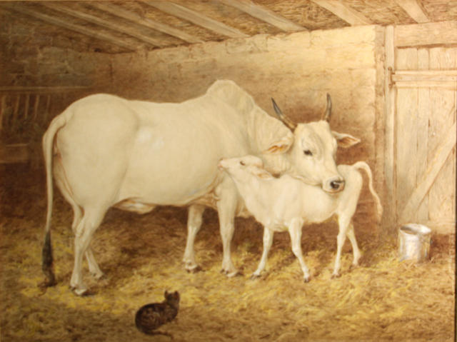 Basil Bradley, Brahamin cow and calf, wc and gouache, 19 x 25in