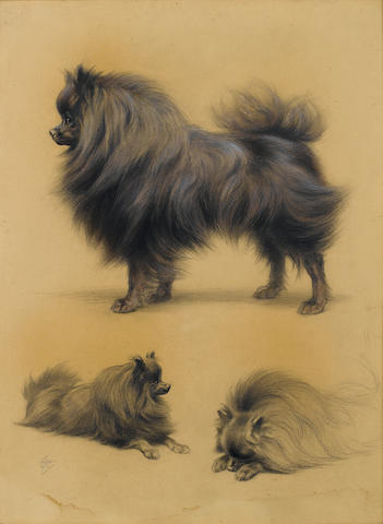 Ferdinand Oger (French, 1872-1929) Studies of a Pomeranian 24 x 18 1/8 in. (61 x 46 cm.)