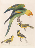 Wilson. American Ornithology. Folio plate volume plus four 8vo text volumes.