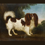19th Century English School Spaniel in a landscape