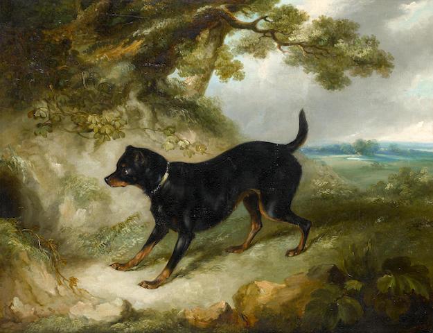 G.R. Smith (British) A Manchester terrier