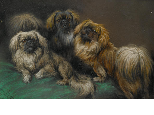 Fannie Moody (British, 1861-1948) Three Pekingese on a cushion