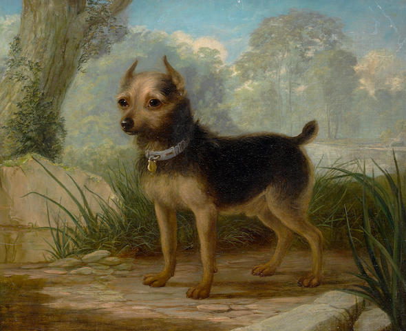 19th Century English School A Terrier in a landscape