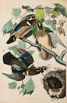 After John James Audubon (American, 1785-1851) Summer or Wood Duck (Pl. 245), 1836 From the Havell edition of The Birds of America, handcolored engraving with aquatint and etching on J Whatman 1836 paper, laid down, 7in repaired tear in upper left, paper window-mount tipped to two edges, framed. sheet size 37 1/2 x 25in