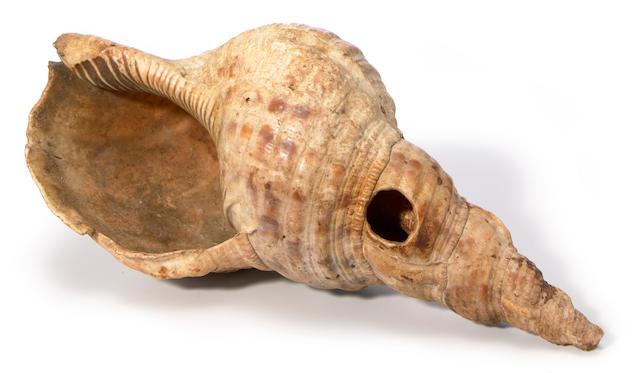 A Polynesian shell trumpet