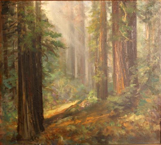 Charles Henry Harmon (American, 1859-1936) Humbolt redwoods, Glendale, California 20 x 22 1/4in