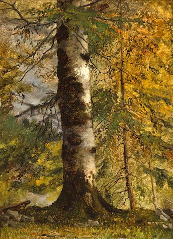 Follower of Achille Etna Michallon (Italian, 1796-1822) A study of a tree 12 3/4 x 9 1/2in (32.5 x 24.2cm)