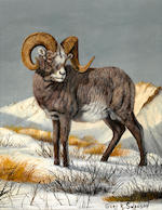 Gary R. Swanson (American, born 1941) Snow sheep; Tibetan Argali; Tin Shan Argali; accompanied by a book World of Wildlife Paintings by the artist (group of three paintings and a book) each 10 1/4 x 8in