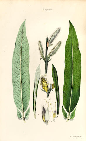 FORBES, JAMES. 1773-1861. Salictum Woburnense: or, a Catalogue of Willows Indigenous and Foreign in the Collection of the Duke of Bedford at Woburn Abbey. [London]: 1829.<BR />