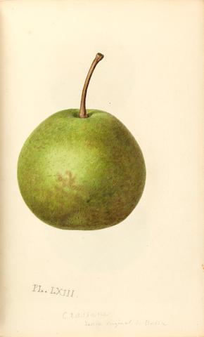 NOISETTE, LOUIS CLAUDE. 1772-1849. Le jardin fruitier, histoire et culture des arbres fruitiers, des ananas, melons et fraisiers. Paris: Audot, 1839.