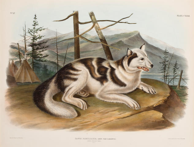 AUDUBON, JOHN JAMES. 1785-1851, after. Canis familiaris ... Mare-indian Dog. [Plate 132.] Philadelphia: J.T. Bowen, 1848.