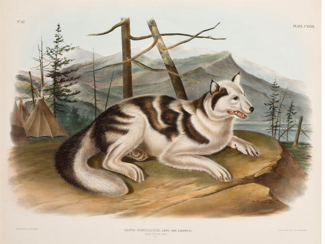 Audubon.  Indian Dog Print