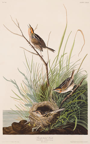AUDUBON, JOHN JAMES. 1785-1851, after. Sharp-tailed Finch. Fringilla caudacuta. [Plate 149.] London: R. Havell, 1832.