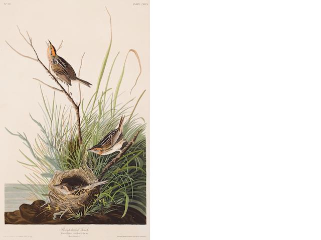 Audubon.  Sharp Tailed finch.