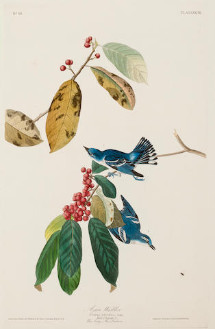AUDUBON, JOHN JAMES. 1785-1851, after. Azure Warbler. Sylvia azurea. [Plate 48.] London: R. Havell, n.d.