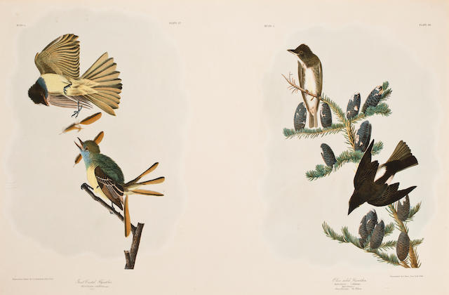 AUDUBON, JOHN JAMES. 1785-1851, after. 4 plates from the Bien edition: Yellow-breasted Chat [Plate 244]; Spotted Sandpiper / Solitary Sandpiper [Plates 342 & 343]; Buff-breasted Sandpiper / Little Sandpiper [Plates 331 & 331, sic]; Great Crested Flycatcher / Olive sided Flycatcher [Plates 57 & 58]. New York: J. Bien, 1860.