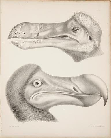 STRICKLAND, H.E., and A.G. MELVILLE. The Dodo and Its Kindred, or The History, Affinities, and Osteology of the Dodo, Solitaire, and Other Extinct Birds of the Islands Mauritius, Rodriguez, and Bourbon. London: Reeve, Benham, and Reeve, 1848.