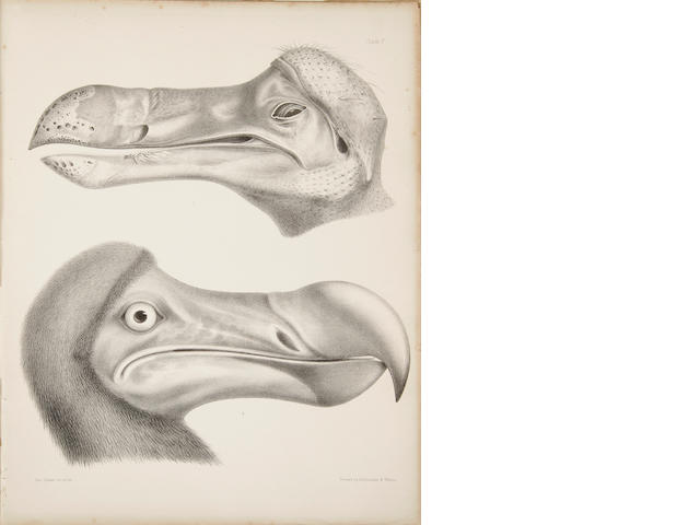 Strickland and Melville.  The Dodo and its Kindred.