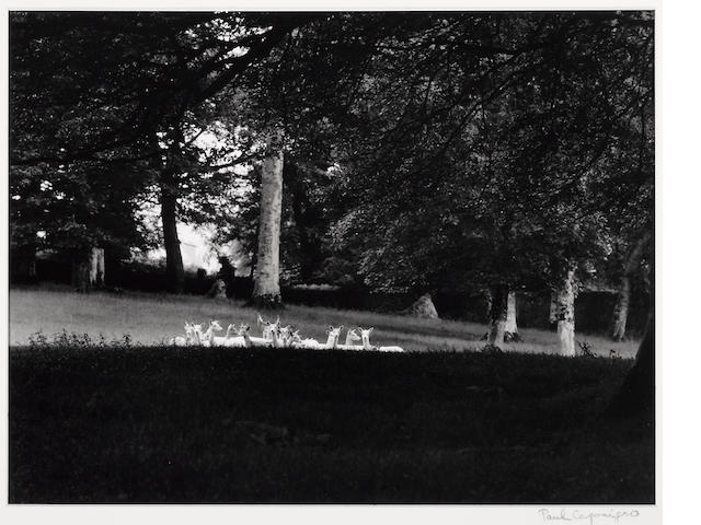 Paul Caponigro (American, born 1932); Standing White Deer, Wicklow, Ireland;