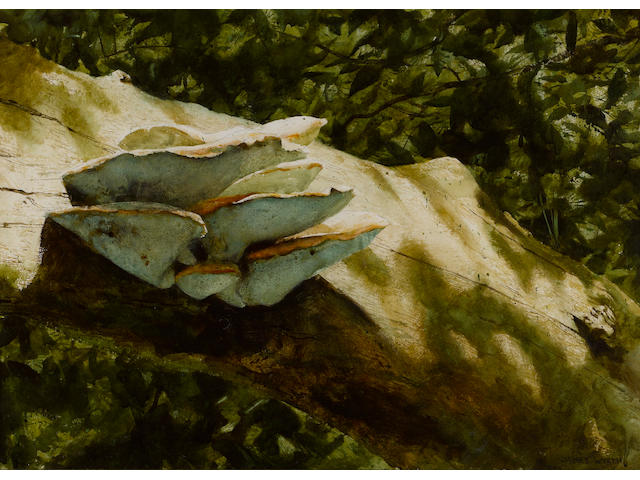 Jamie Wyeth (American, born 1946) Tree fungus 22 x 30in