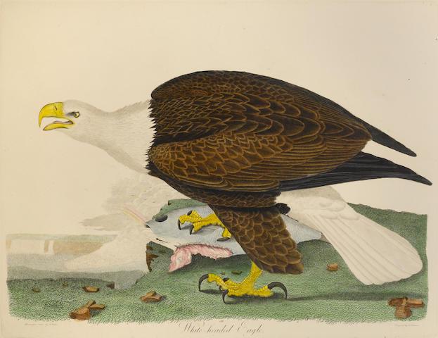 WILSON, ALEXANDER, AND CHARLES LUCIEN BONAPARTE. American Ornithology. Philadelphia: Porter & Coates, [1871].