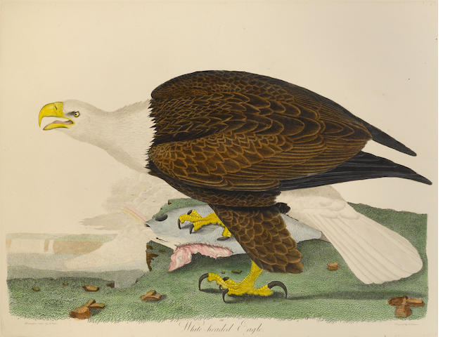 WILSON, ALEXANDER. 1766-1813 & BONAPARTE, CHARLES LUCIEN.  1803-1857. American Ornithology. Philadelphia: Porter & Coates, [1871].