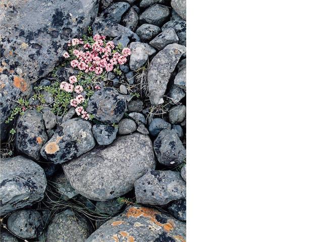 Eliot Porter (American, 1901-1990); Iceland, Portfolio II;